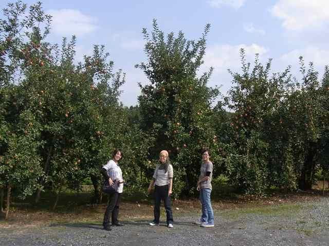 リンゴの木と親子.jpg