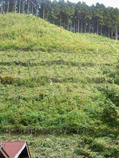 下草刈り.jpg