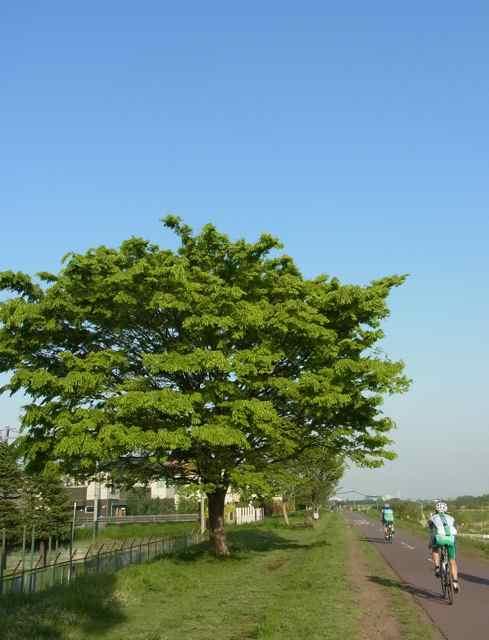 新緑の季節.jpg