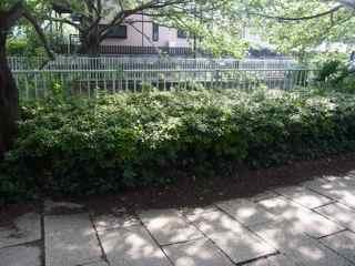 茂みの下2.jpg
