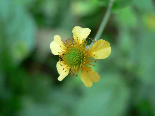 黄色い花.jpg