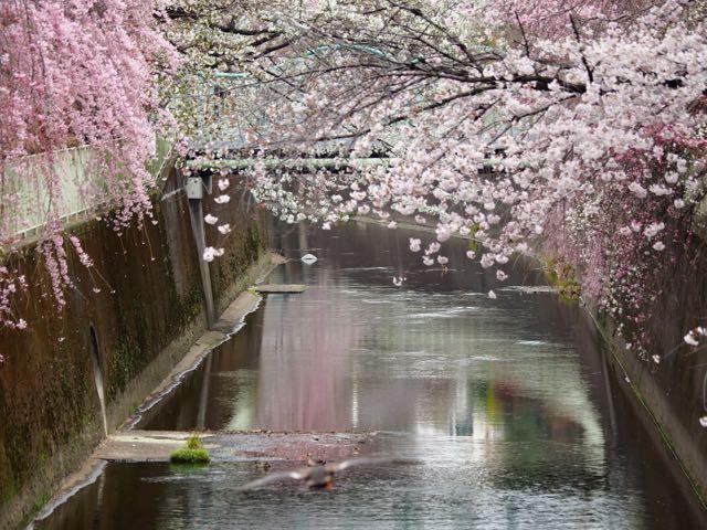 八幡橋2.jpg