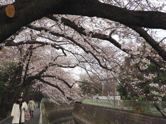 神田橋.jpg